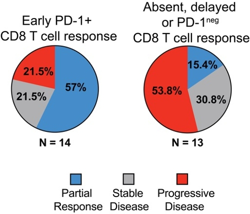 Molecule CD28 is required for proliferation following PD-1-targeted treatment.